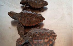 Fauna selvatica stremata dal freddo: il Consorzio di Torre Guaceto salva 5 esemplari