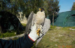 Prosegue la convenzione tra Regione Puglia e Centro fauna selvatica della Provincia di Brindisi