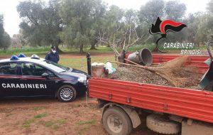 Tentano di rubare 5 quintali di olive da un fondo agricolo. I Carabinieri di Oria bloccano e arrestano tre persone.