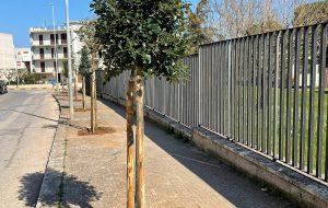 Al via la prima fase della piantumazione di 200 nuovi alberi in tutto il territorio fasanese