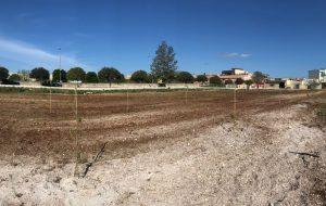 San Vito: piantati 96 alberi nei pressi del Liceo Scientifico