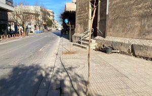 Francavilla: piantumati 32 alberi in via San Francesco