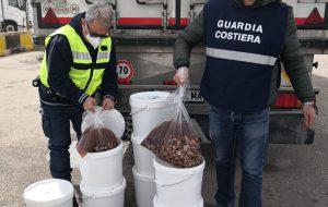 Sequestrati 80 Kg. di cozze nere sgusciate provenienti dalla Grecia