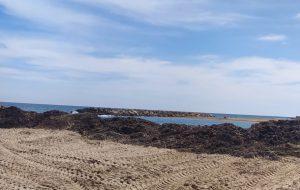 Montagna di alghe ammassate a Campo di Mare: interviene la Capitaneria di Porto
