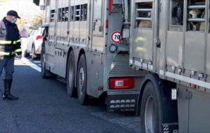 La  Polizia Stradale di Brindisi salva 11 cavalli stipati in un autocarro