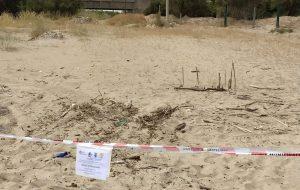 Il Centro fauna selvatica agevola la nidificazione di Corriere piccolo sulla sabbia di Apani
