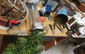 Beccato con erba addosso: a casa aveva una serra artigianale ed oltre 100 grammi di marijuana