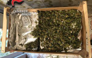 Possesso di droga: arresti a Brindisi e Torre Santa Susanna