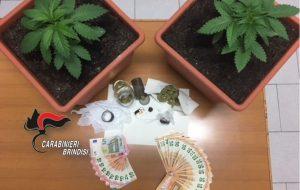Allestisce laboratorio per la coltivazione di cannabis e produzione di marijuana: arrestato 34enne